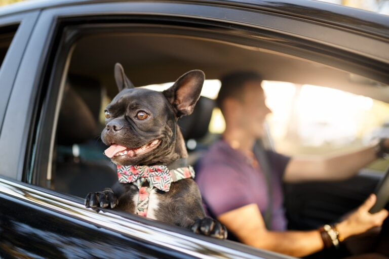 pet tinted car window