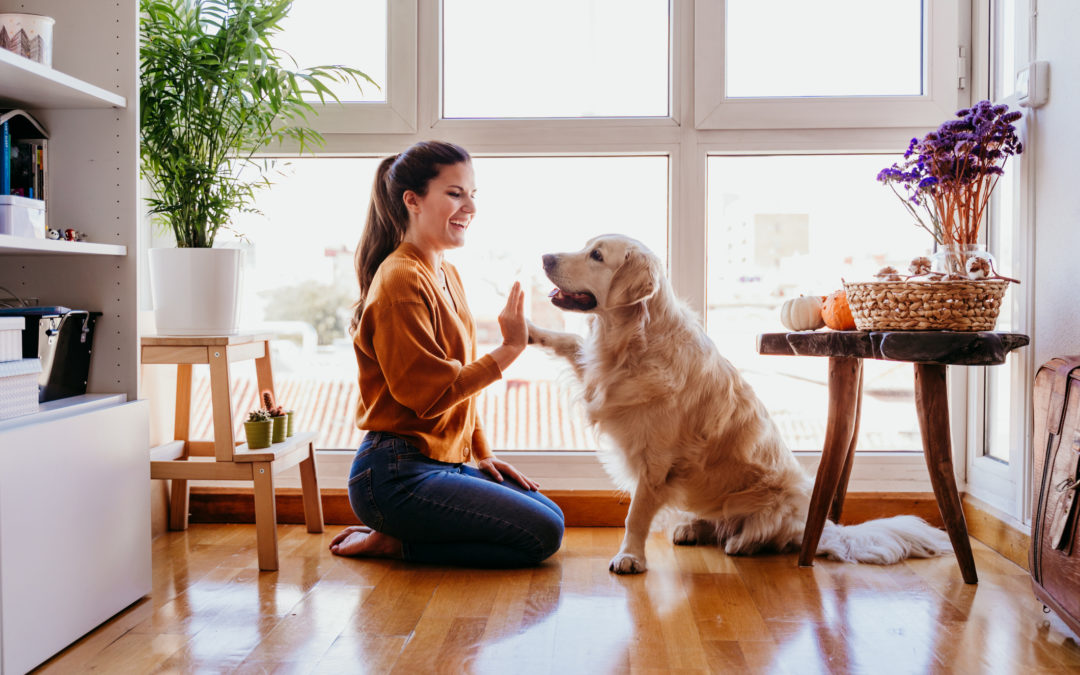 How Window Tinting Benefits Your Furry Friends