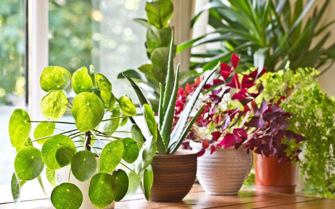 Indoor Gardens – Fun and Useful